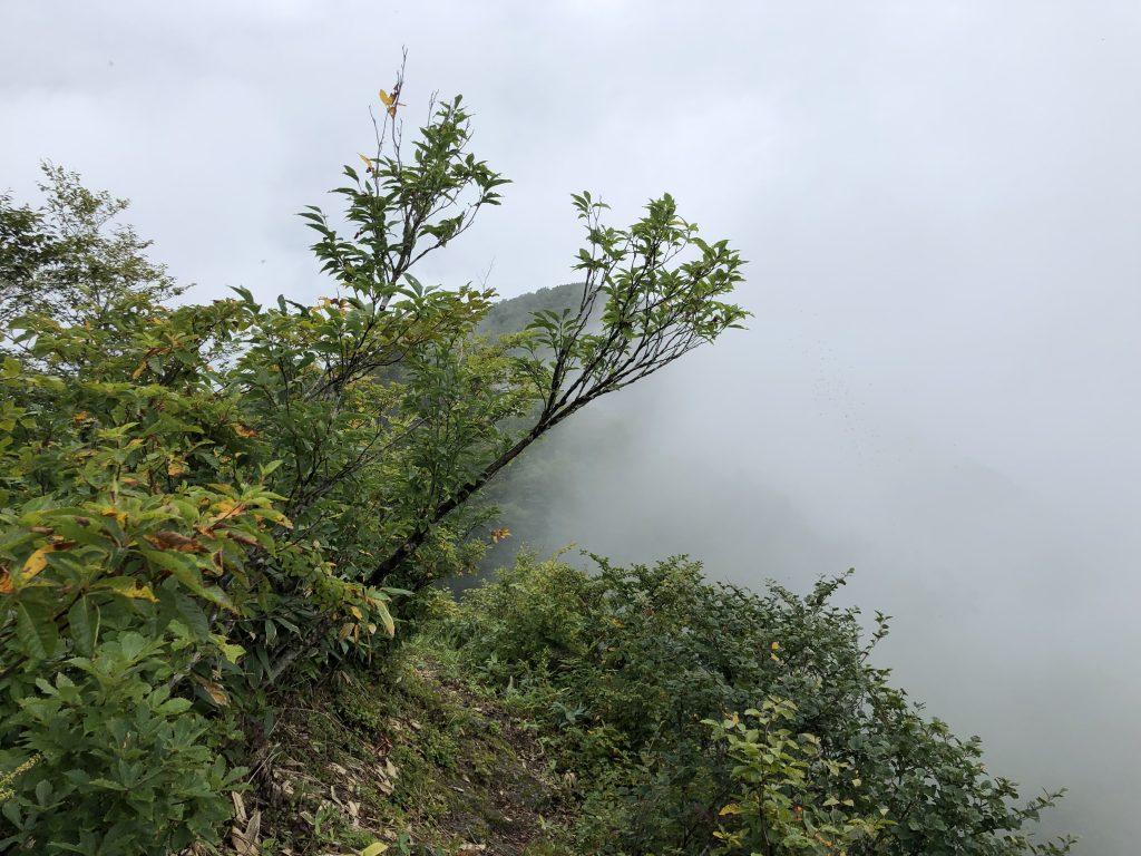 鉢伏山登山道