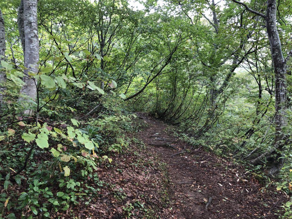 飯豊山の登山道